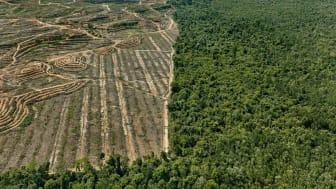Antropocen: Clearcut #1, Palm Oil Plantation, Borneo, Malaysia 2016