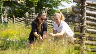 Sara Hedlund och Karin Håkansson inspekterar färdig äng i Alvesta