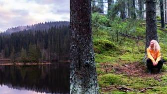 Skogsbad - upplev det kravlösa lugnet i naturen
