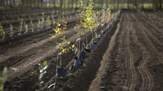 1000 apple trees up for adoption in Sweden