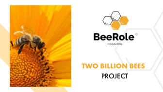 2 Billion Bees in 2020