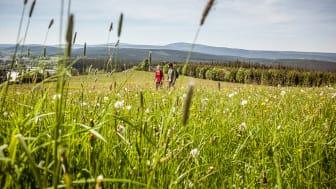 Wandern auf dem Kammweg Erzgebirge-Vogtland (Foto: TVE/René Gaens)