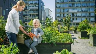 Blomstrande BRF-gårdar bidrar till ökad biologisk mångfald