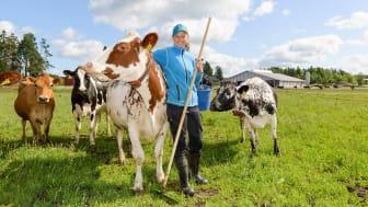 Arla toteutti laajan biodiversiteettiselvityksen maitotiloilla – laiduntaminen osoittautui superteoksi luonnon monimuotoisuudelle