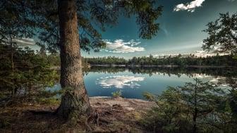 Vinnarbilden, tagen vid sjön Djupevatten, Lilla Edet. Foto: Piotr Korytowski / Vi-skogen