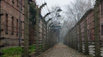 Förintelsens minnesdag i Malmö