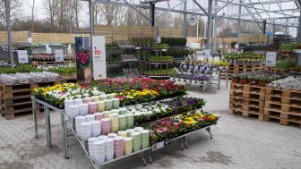 Nu öppnar flera av butikerna upp sin trädgårdsmarknad så att du som kund kan välja att hålla dig utomhus. (Bilden är tagen vid ett tidigare tillfälle.)