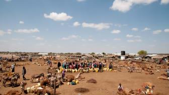 Barnen på Afrikas horn svälter