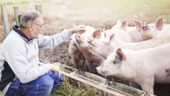Idag får den som behöver kunskap enskilt söka, sammanställa och värdera det som finns tillgängligt. Detta är ineffektivt eftersom det ofta finns många andra personer inom svensk animalieproduktion som är i behov av samma kunskap. Foto: Scandinav.