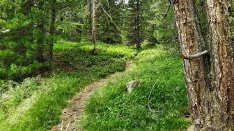 Blandad kompott från Skogsutredningen - Stärkt äganderätt, flexibla skyddsformer och naturvård i skogen?