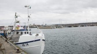 Fiskebåt i hamn