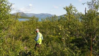 Inventering av en av Riksskogstaxeringens provytor i fjällbjörkskog. Foto: Sören Wulff, SLU
