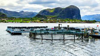 Hensynet til bærekraft og ytre miljø er sentralt i flere av sertifiseringsordningene for akvakultur. (Foto: iStockPhoto)