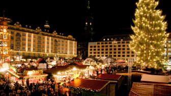 9. Weihnachtsbaum in Dresden