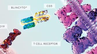 Blincyto är en BiTE-antikropp som stimulerar kroppens egna T-celler att angripa leukemiceller som uttrycker CD19. I fas II-studien BLAST ledde en behandlingscykel med Blincyto till att 78 procent av patienterna inte längre hade detekterbar sjukdom.