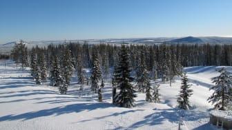 Gold of Lapland - från kust till fjäll