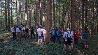Auf den Spuren des Klimawandels und 150 Jahren Forstgeschichte im Metzinger Stadtwald
