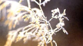 December Nacka Musikklasser