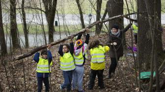 FAU på Tøyen skole får støtte til å gjøre nærskogen Ola Narr på Tøyen til et tursted. Sammen med fagfolk skal de tilrettelegge for at barnehage- og skolebarn i lokalmiljøet bruker og blir glad i det lille skogholtet. (Foto: Sverre Chr. Jarild)