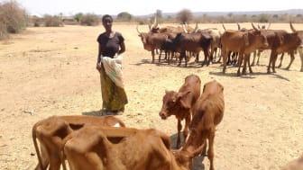 © Welttierschutzgesellschaft / Tanzania Animals Protection Organization (TAPO)