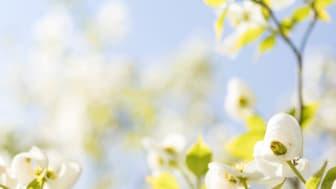 spring.clean.m.jpg