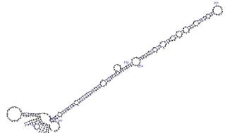 MikroRNA-analys kan bli ett vapen i kampen mot prostatacancer