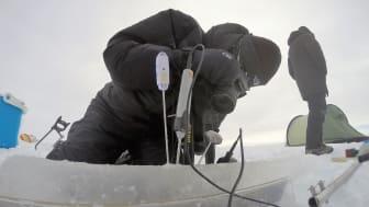 To av de fem forskningsprosjektene NIVA har fått støtte til, dreier seg om arktiske forhold. (Illustrasjonsbilde: NIVA)