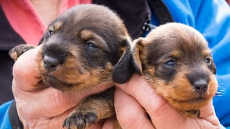 Antalet hundar har enligt en Novusundersökning ökat med över 10 procent sedan 2012.