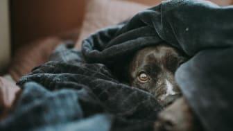 Ungewohnte Lärmbelastung: Der bundesweite Warntag kann bei Tieren Stress verursachen. (Foto: Sandra Seitamaa / Unsplash)