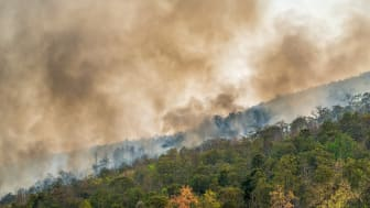 Flere påsatte brande hærger Brasilien end sidste år, men opmærksomheden er ikke så stor som sidste år.