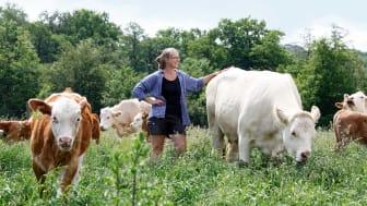 Starkt förtroende för djurhållning hos konsument, men skillnader mellan djurslagen