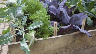 Har du råkat ut för kållarver? Gråmögel på jordgubbarna? Sorgmyggor bland krukväxterna? Då kan biologiska växtskyddsmedel vara en hjälp.