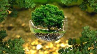 Glasbubbla-med-träd_700x465.jpg