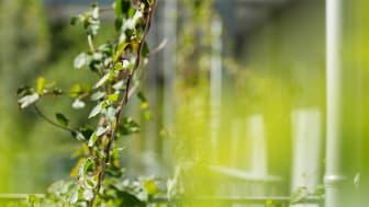 Klängvegetationen trivs med flexibelt växtvajersystem från Urbangreen