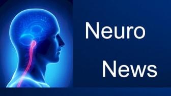 Wie kann das Gehirn flexibel mit komplexen Informationen umgehen?