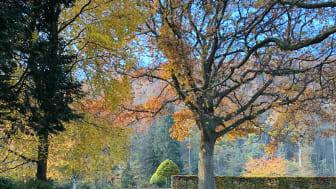 Norrviken under hösten