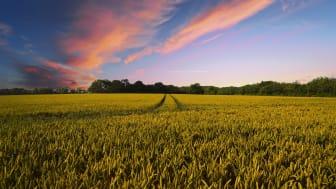 I de områdena med högst avkastning finns oftast de högsta markpriserna. Foto: Pixabay