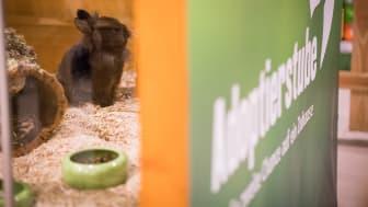 """Die Adoptierstube im Fressnapf-Markt Mannhei-Vogelstang - mit """"Bewohner"""" Felix"""
