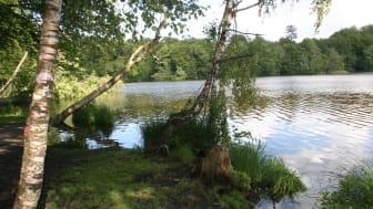Ved Løjesø i Rude Skov