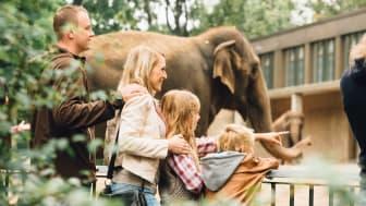 Berlin Zoo Elefanter © visitBerlin_Foto:Martin Peterdamm OBS: Videre bruk av bildet ikke tillat.