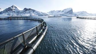 Foto: Johan Wildhagen/Norwegian Seafood Council