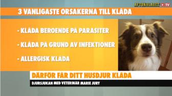 Bild från Aftonbladet TV