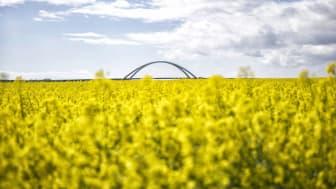 Rapsblüte Fehmarn © Tourismus-Service Fehmarn, Foto Thies Rätzke