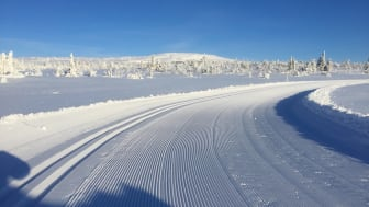 "Skidspåret ""Högfjällsrundan"" 879 m ö.h. i Storhogna"