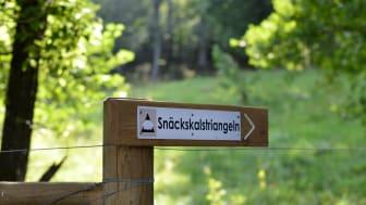 Den nya vandringsleden Snäckskalstriangeln passerar genom tre skalgrusområden i Uddevalla.