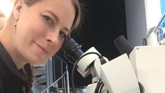 Anna Silwerulv studerar textilfragment i sitt mikroskop. Foto: Vasamuseet