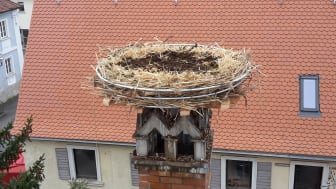 Storchennest Unterneuses_3000x2000