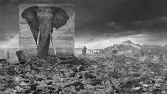 Wasteland With Elephant by Nick Brandt