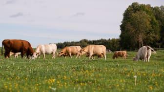 Ekologiskt brukad jordbruksmark (åkermark + betesmark) har ökat med 58 procent på tio år.
