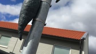Delar av familjen Hackspett i HSB brf Smultrongården i Linköping